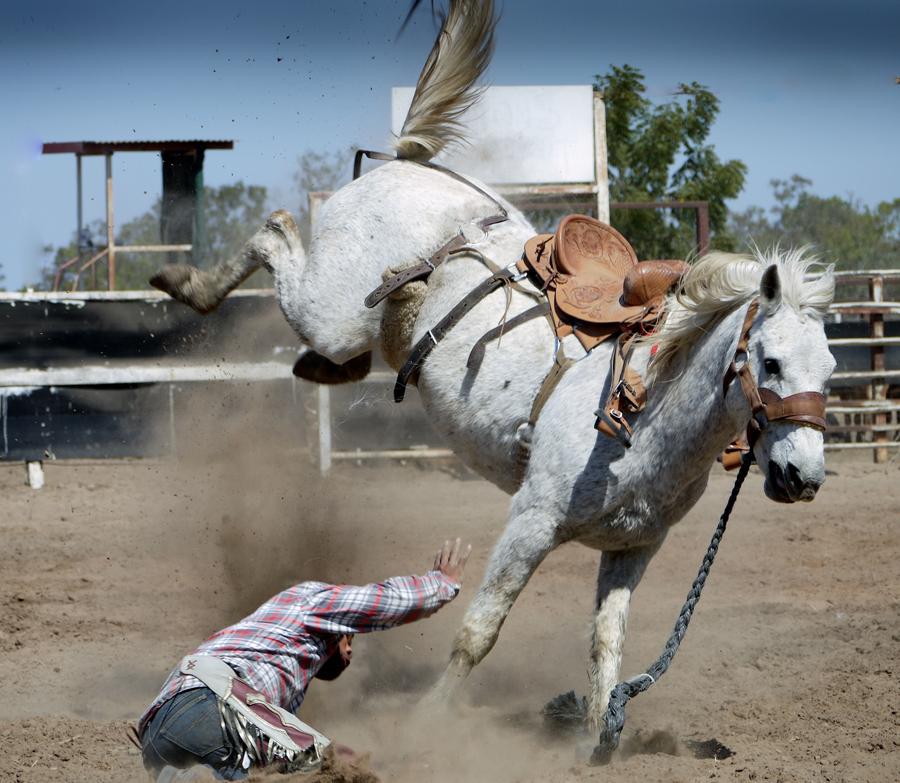 action-animal-bronco-bucking-33251